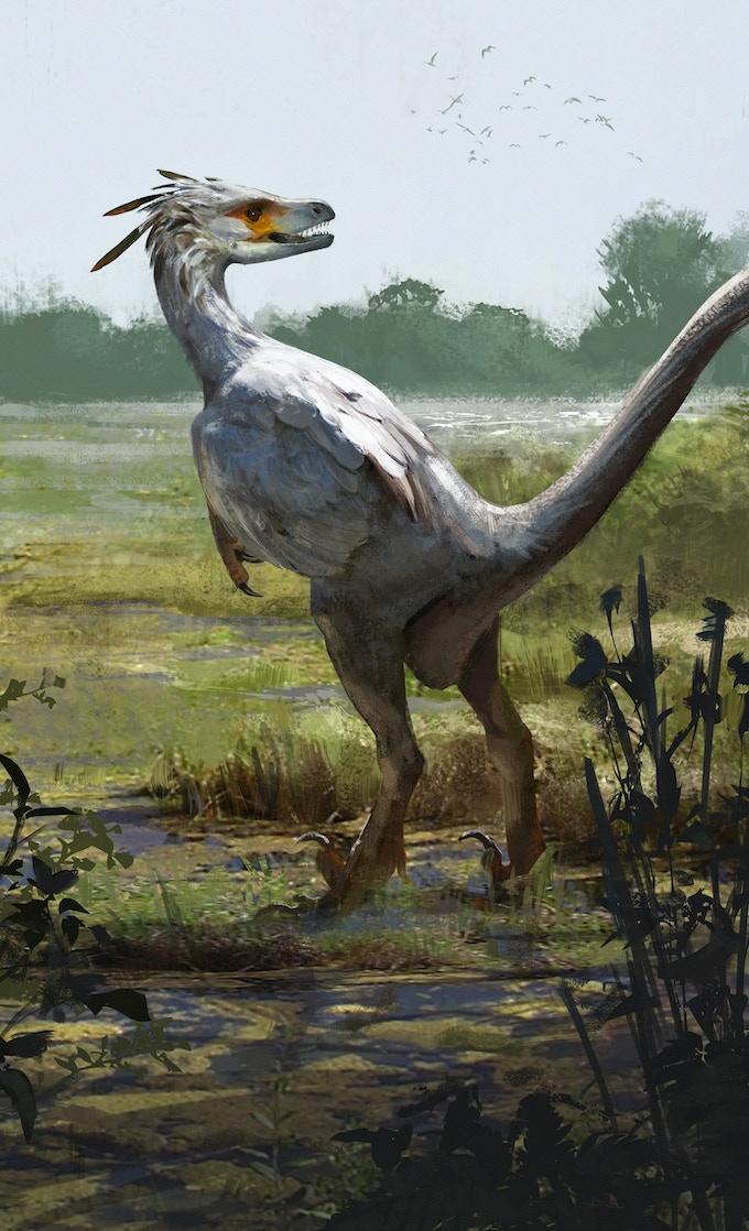 'Saurornitholestes package art by Jonathan Kuo'