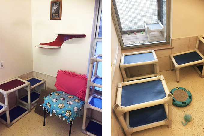 """Animal Rescue League's """"Cat Colony Room"""", which our cat room will be loosely based off of"""
