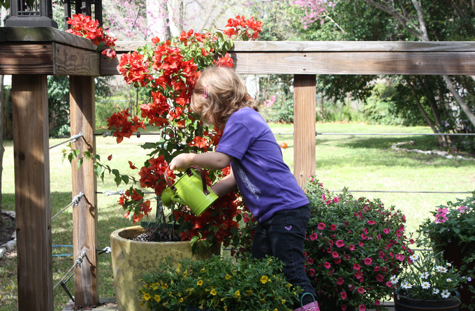 Evelyn, watering the old fashioned way.