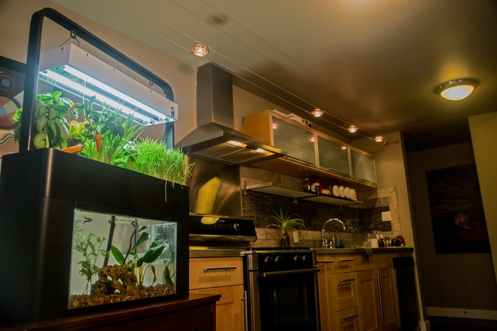 The AquaSprouts Garden stylishly combines your aquarium and garden into a self-sustaining desktop ecosystem.