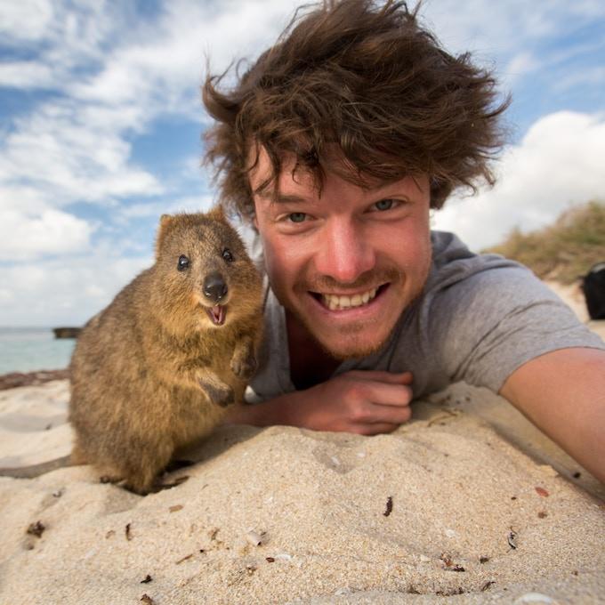 Quokka Selfie - Allan Dixon