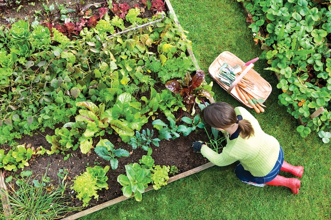 Why Buy Chemical Fertilizer and Pesticide-Laden Commercial Produce?