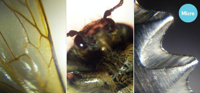 bee's wing / beetle / knife blade