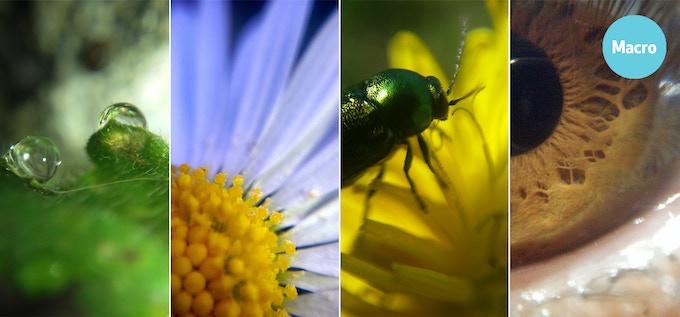 drop on a leaf / daisy / beetle on a flower / human eye