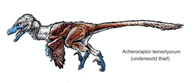 'Acheroraptor action figure concept art'