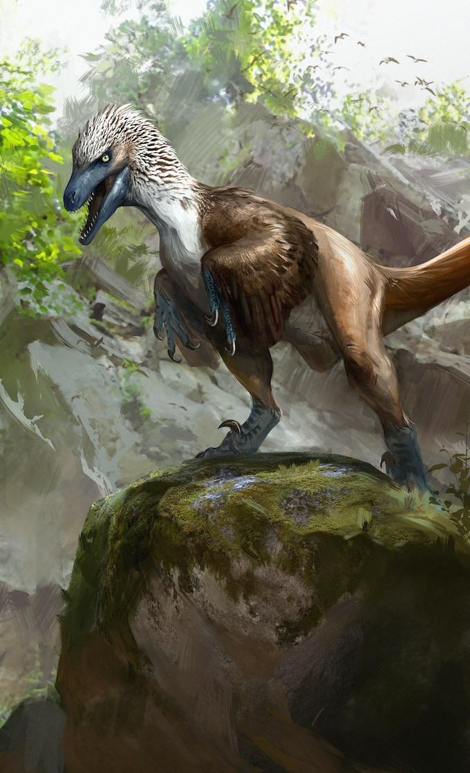 'Acheroraptor package art by Jonathan Kuo'