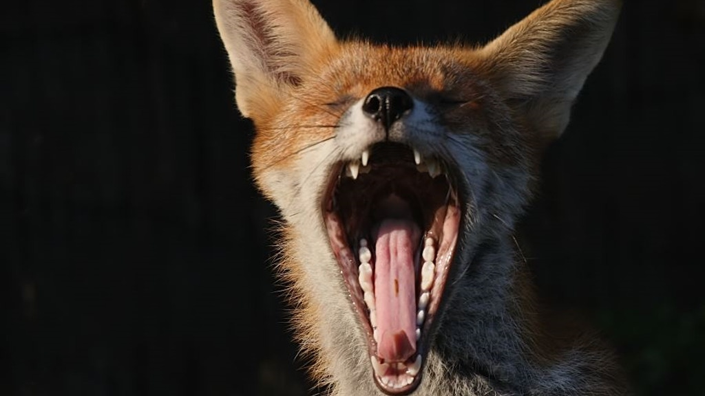 COCKY THE FOX —an adventure in 20 installments project video thumbnail