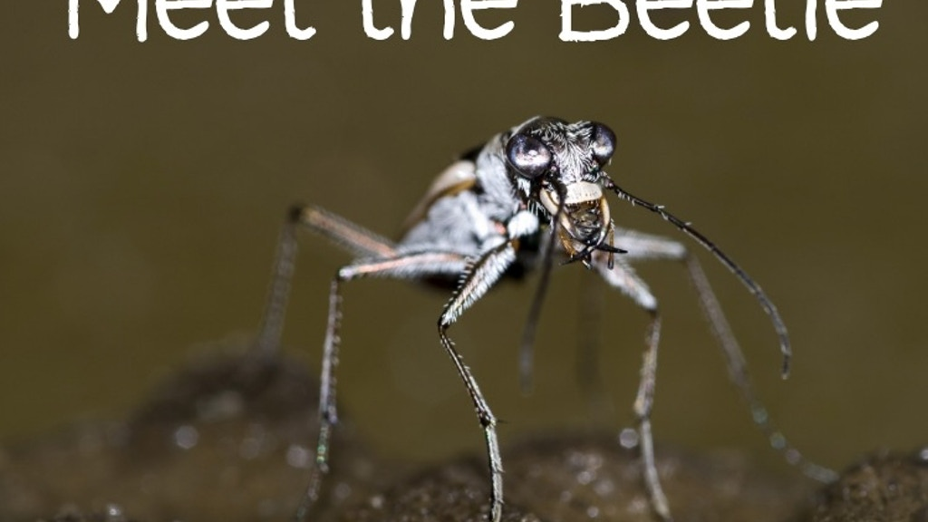 Meet the Beetle: A Film About the Rarest Insect in Nebraska project video thumbnail