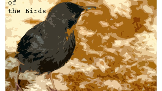 The Language of the Birds project video thumbnail