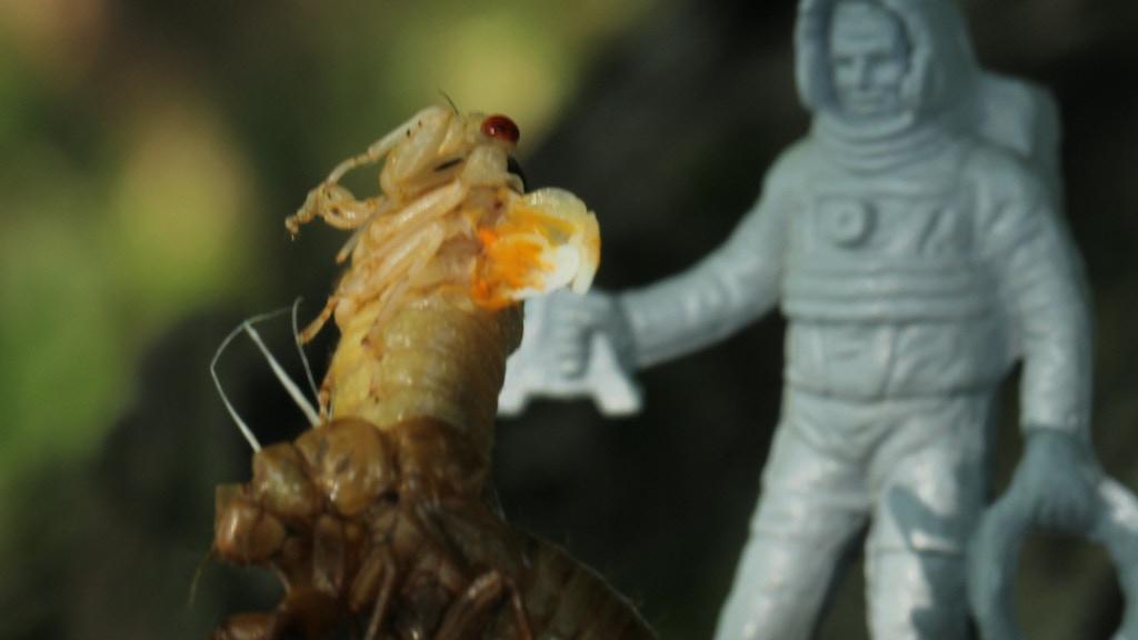 Brood XIX: Cicada Movie project video thumbnail
