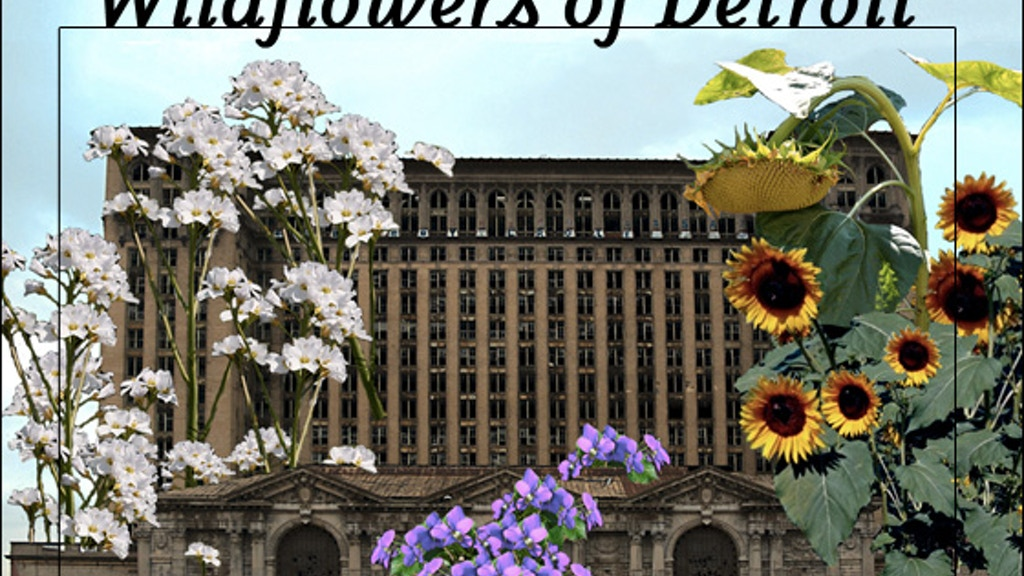 The Wildflowers of Detroit : Community Ecology project video thumbnail