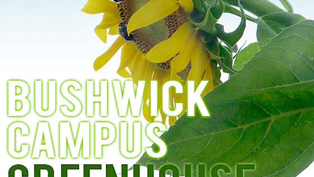 Bushwick Campus Greenhouse project video thumbnail