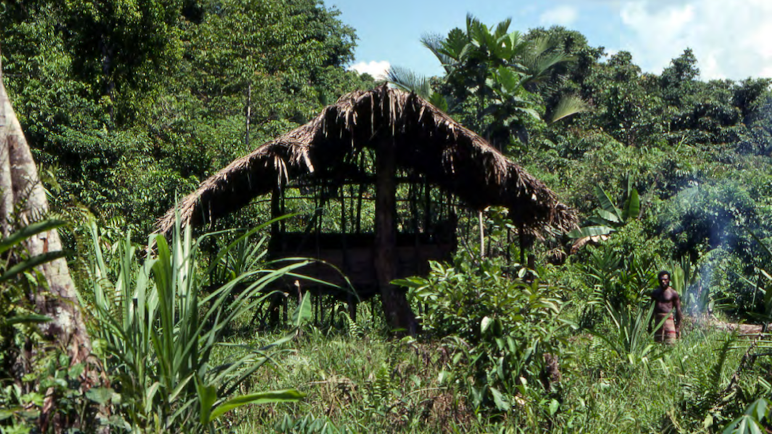Studies in Papua New Guinea: Architecture, Art and Ecology by Brian
