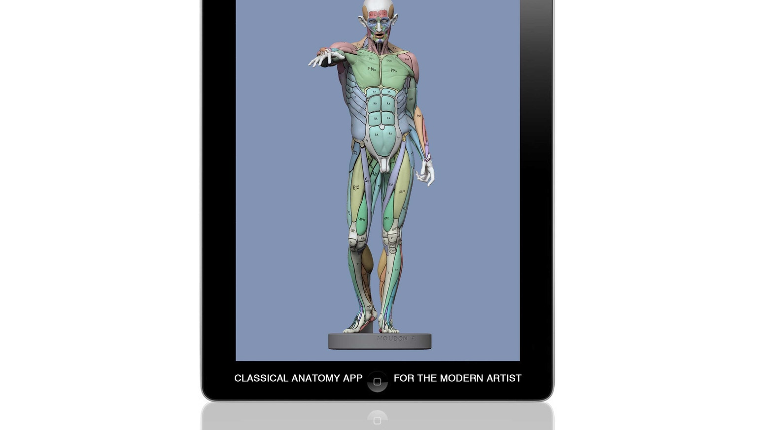 L\'Ecorché: Classical Anatomy for Artists by Michael Defeo — Kickstarter