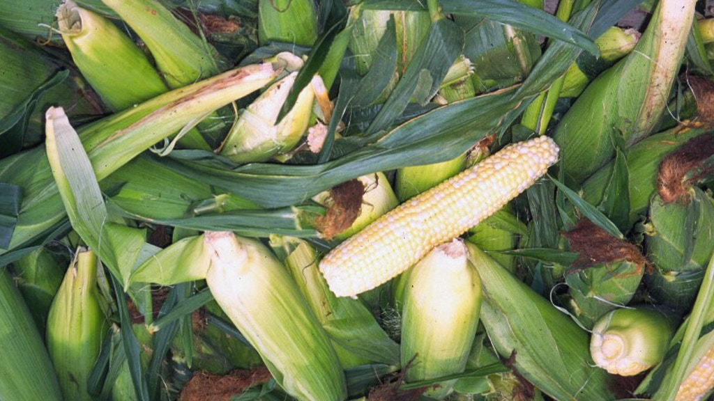Project image for Midwest Maize: History of Corn in the Heartland