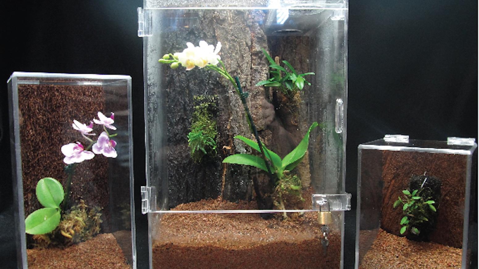 Miniature Orchid Desktop Vivarium By Biovivara Seth Rachel Hiser