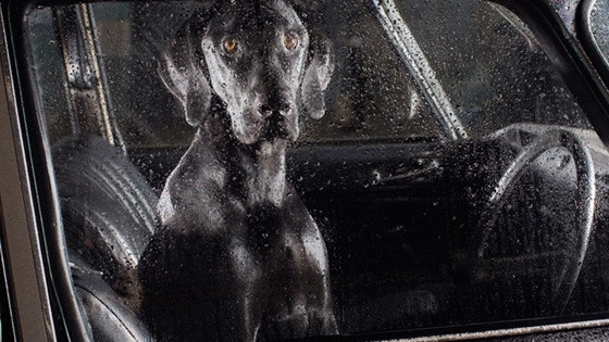 Dogs in cars.  A photography art book project video thumbnail