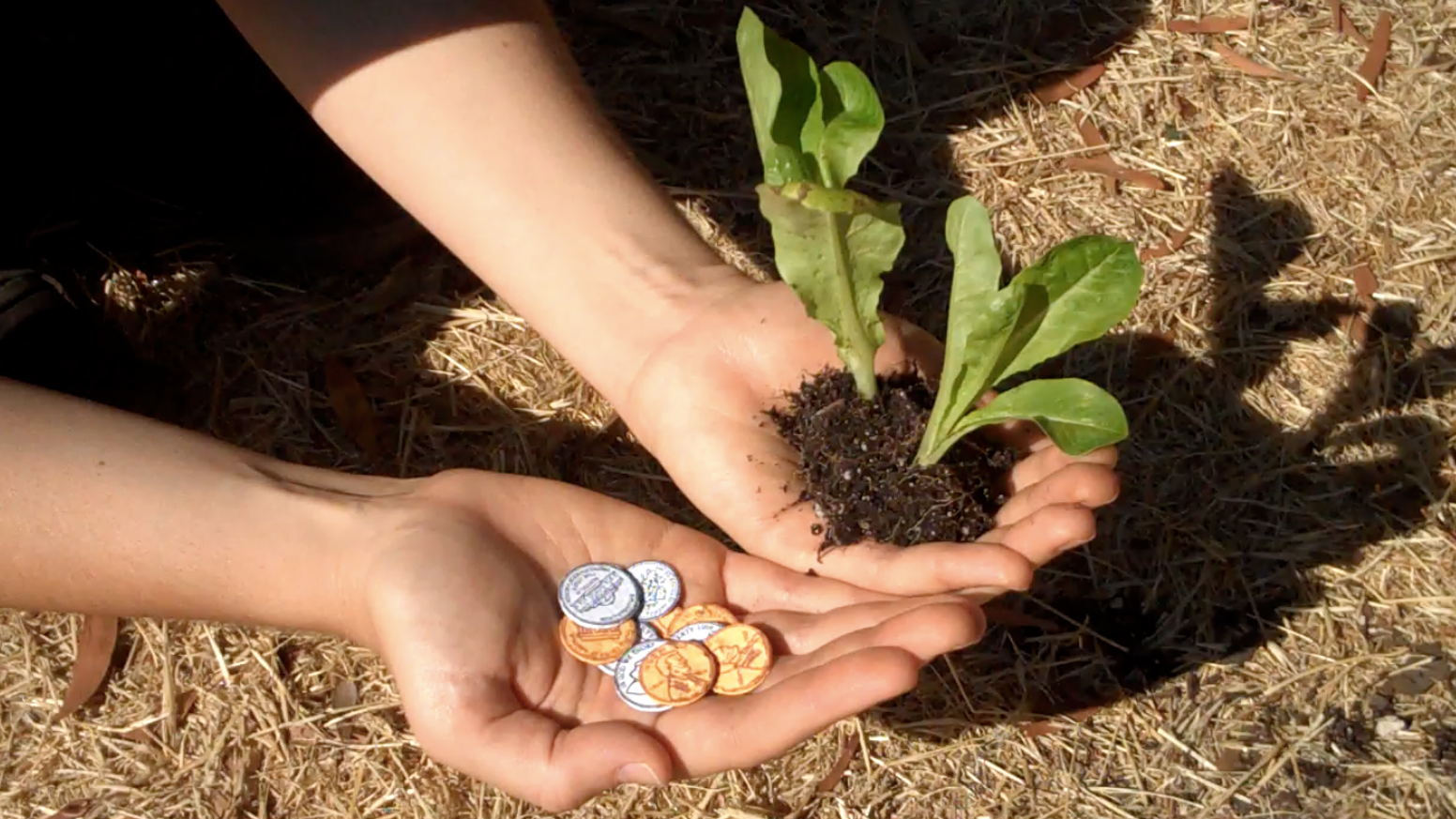 Seed Money Coins You Can Plant By Leafcutter Designs Kickstarter