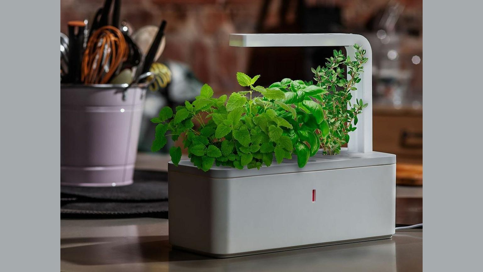 smart herb garden by click grow by click grow kickstarter. Black Bedroom Furniture Sets. Home Design Ideas