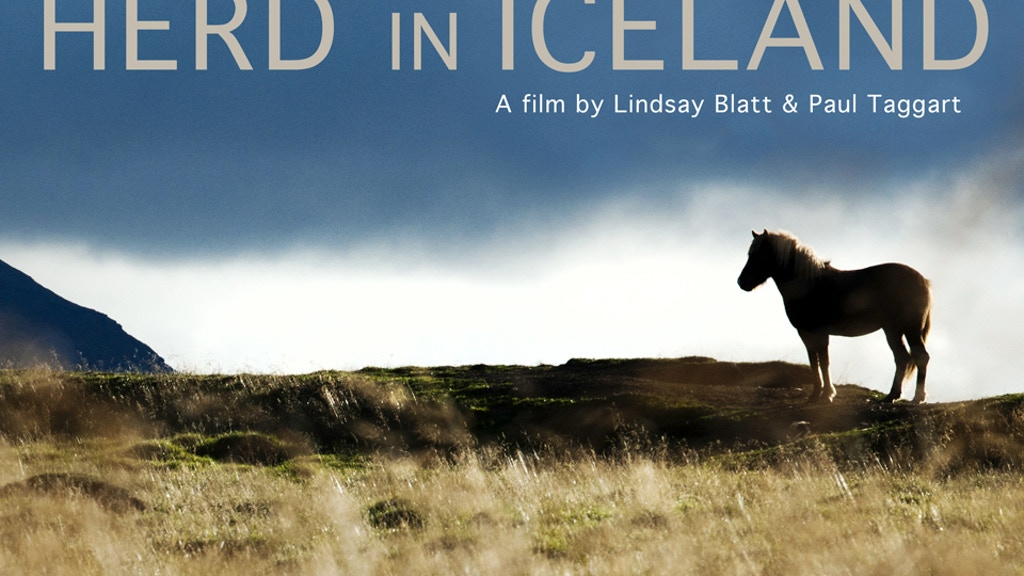 HERD IN ICELAND project video thumbnail