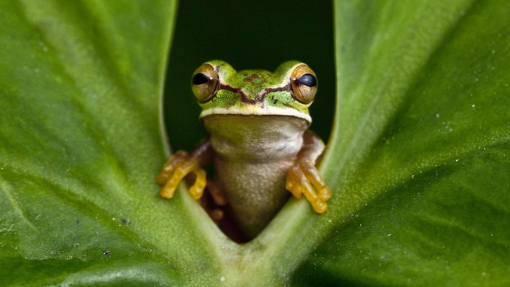 Amphibians + Hollywood FX + Wild = METAMORPHOSIS project video thumbnail