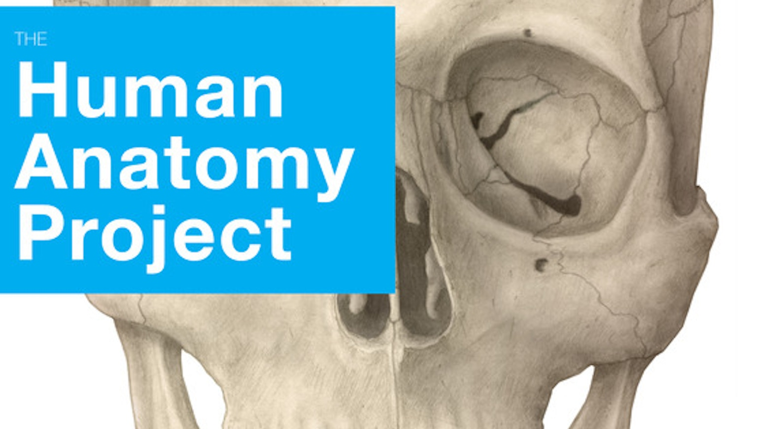 Anatomy Flash Cards: The Future of Anatomy Learning by Tyler ...