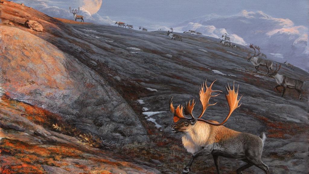 Arctic Alaska Art & Adventure project video thumbnail