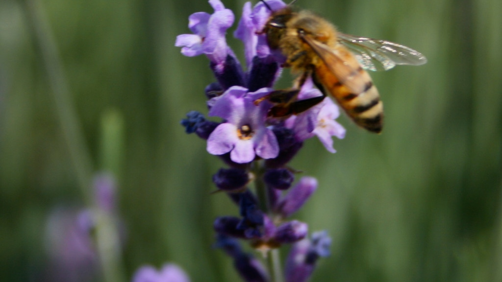 North Fork Bee Co. project video thumbnail