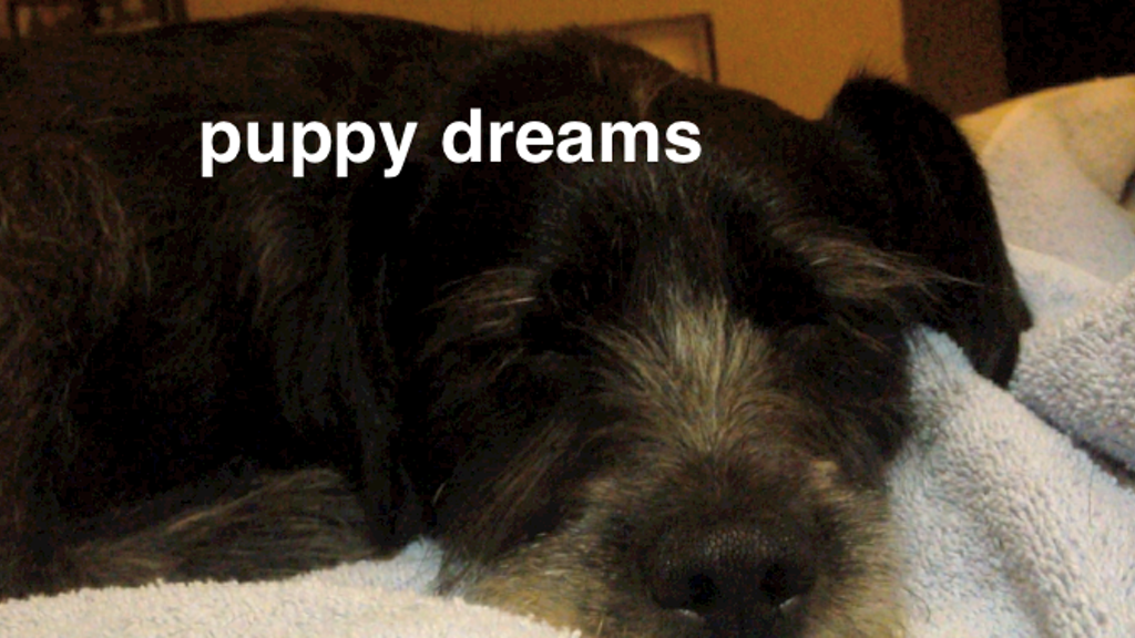 Puppy Dreams project video thumbnail