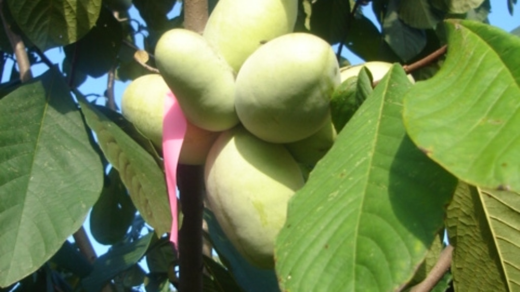 Pawpaw: The story of America's forgotten fruit project video thumbnail