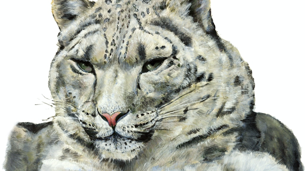 Where Snow Leopard Prowls, Wild Animals of Tibet project video thumbnail