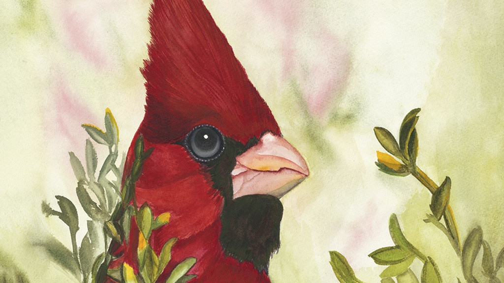 Arizona Native Bird Painting Series project video thumbnail