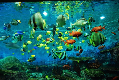 Fish tank melody by chase meyerson kickstarter for 10 fish are in a tank riddle answer