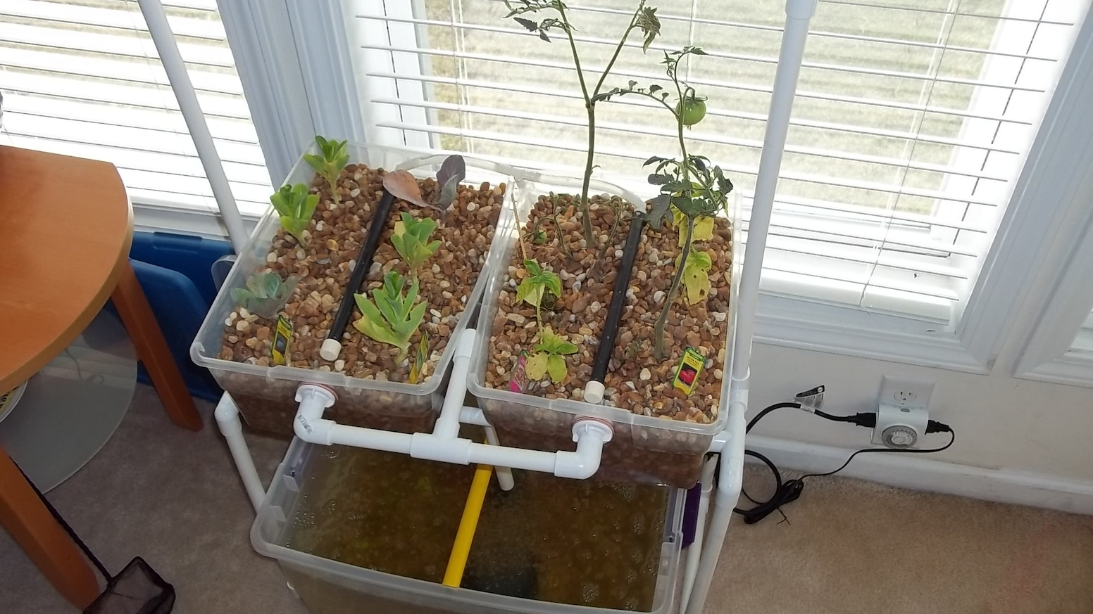 This System Will Let You Grow Food And Raise Fish In A Small Amount Of E Right Your Home Or Apartment All Year Long