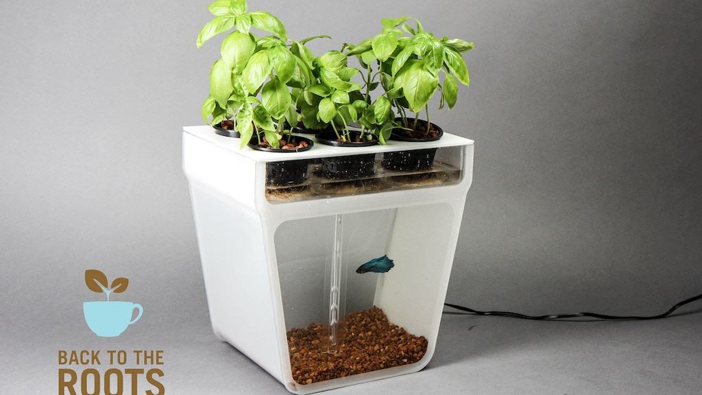 Home Aquaponics Kit: Self-Cleaning Fish Tank That Grows Food project video thumbnail