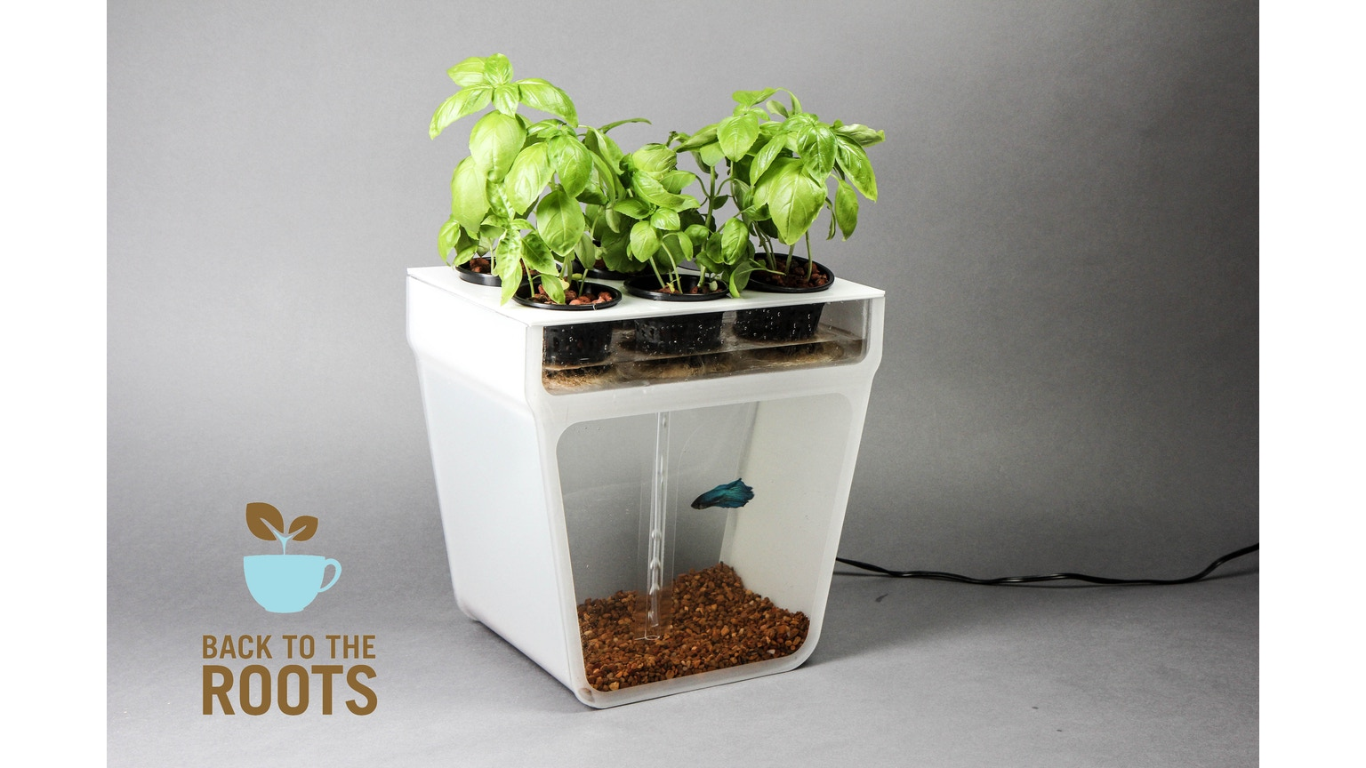 Home aquaponics kit self cleaning fish tank that grows for Aquaponics fish