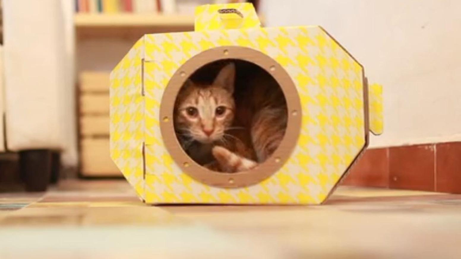 Louie's box - Cat in a Box
