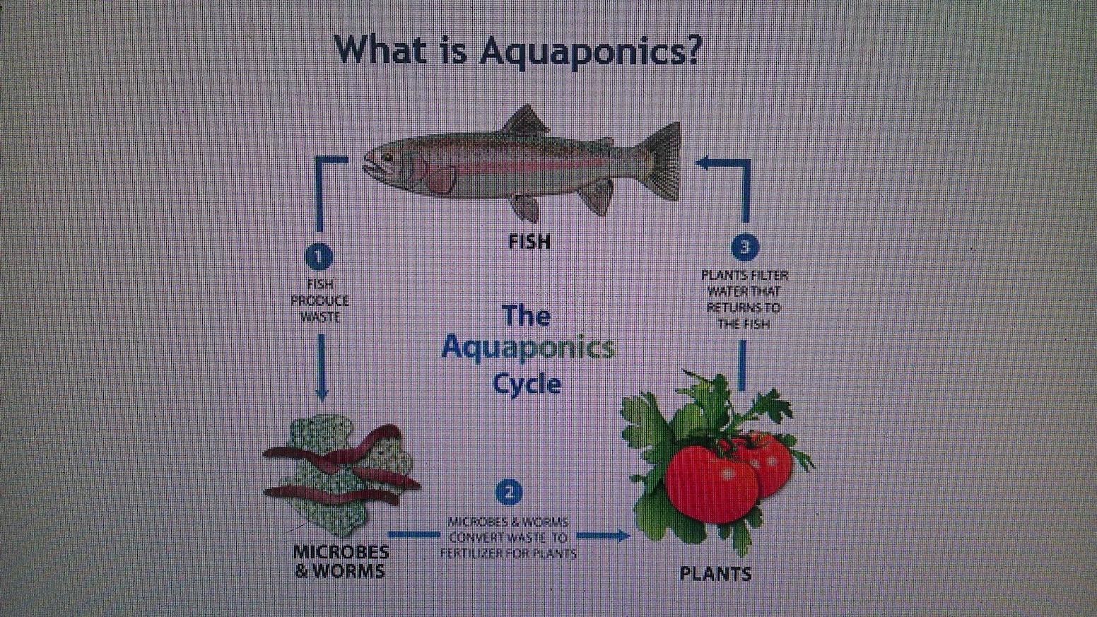 Back 40 Aquaponics by Casey Williams — Kickstarter