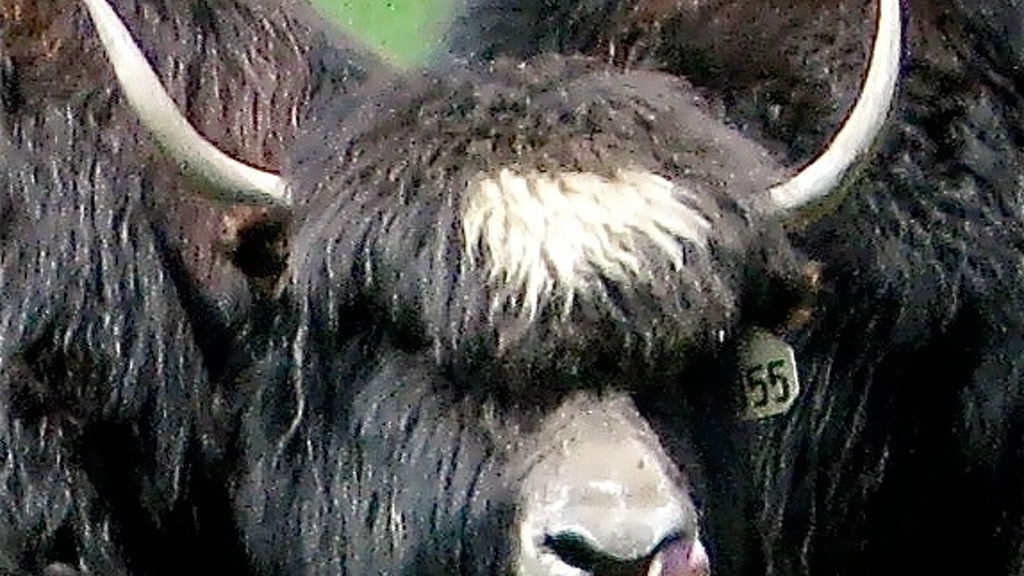YakItToMe! Vermont Yak Mobile BBQ Food Cart project video thumbnail
