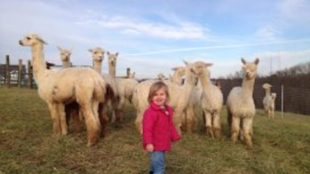 Suri Alpaca Fiber Educational Film project video thumbnail