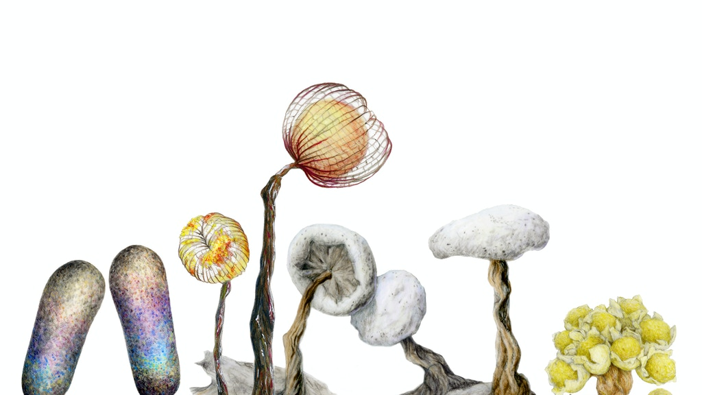 Slime Molds: An Illustrated Guide project video thumbnail