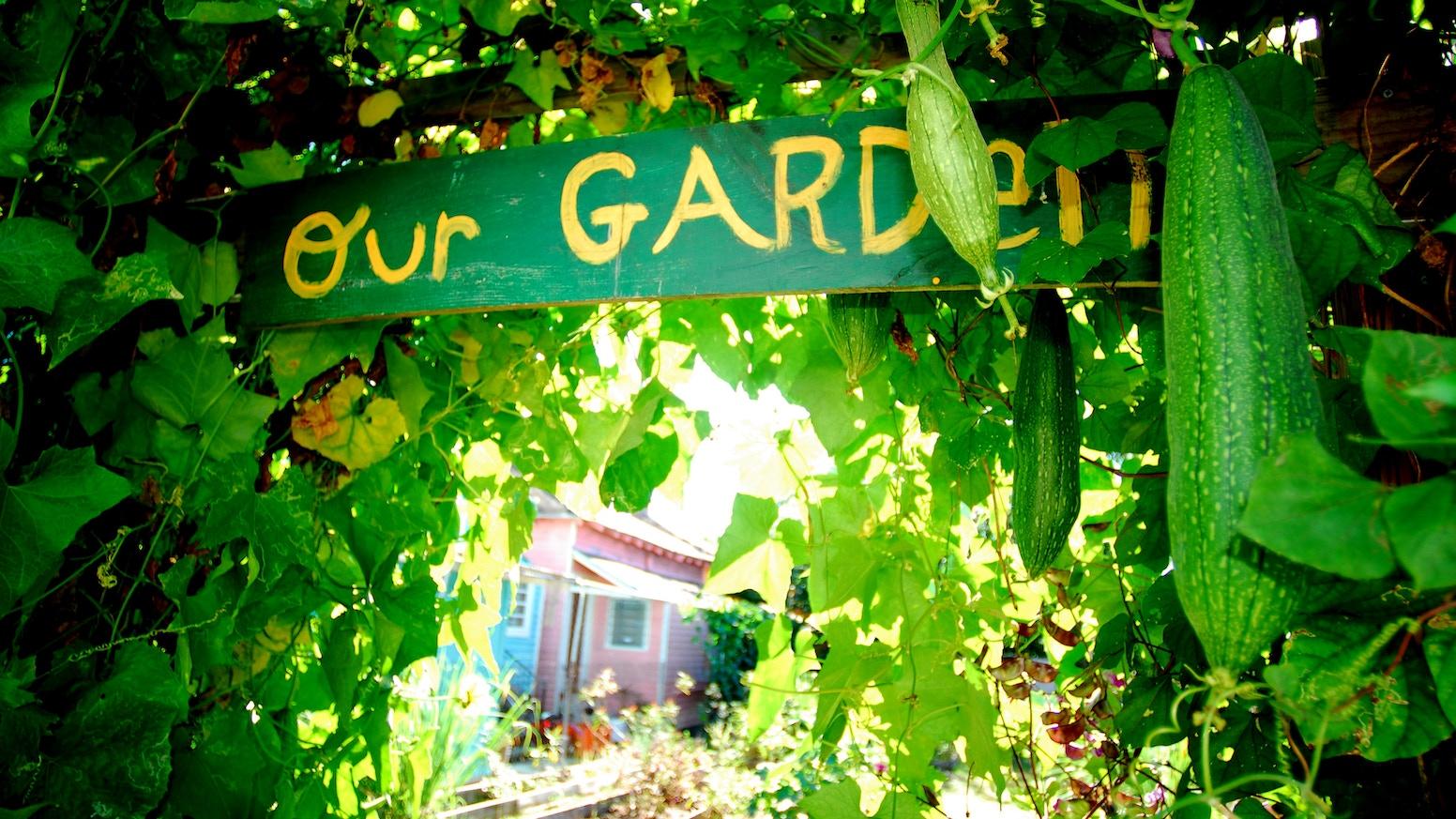 Nola Gardens 2013 By Ica Crawford Kickstarter
