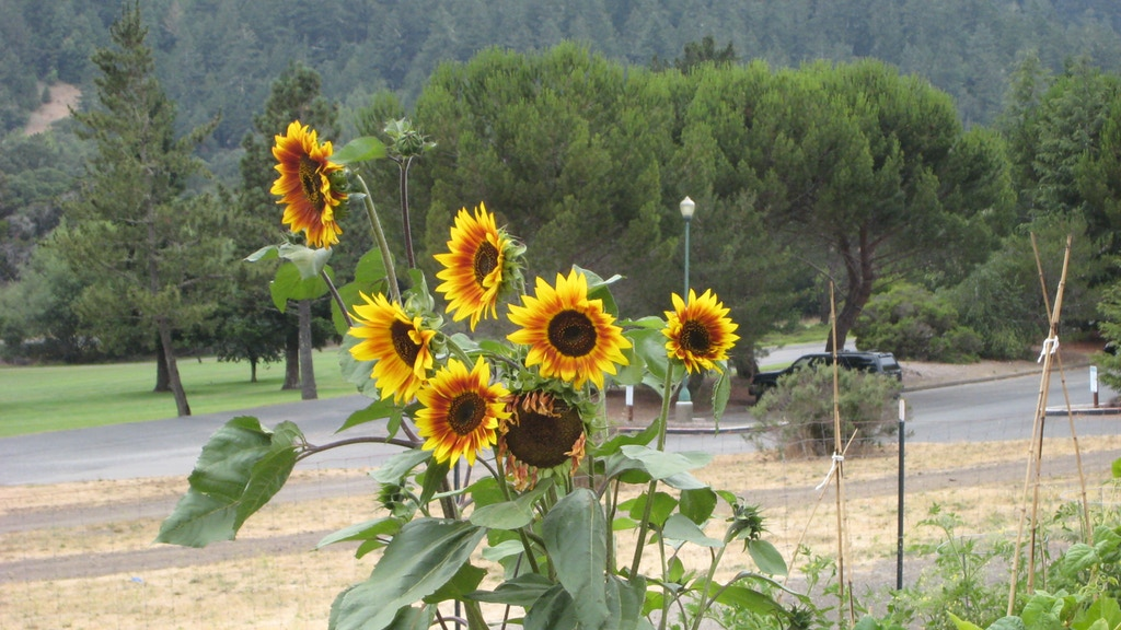 San Geronimo Valley Community Garden project video thumbnail