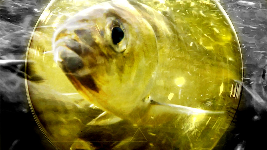 The Herring Migration Documentary Series (3 Episodes) project video thumbnail