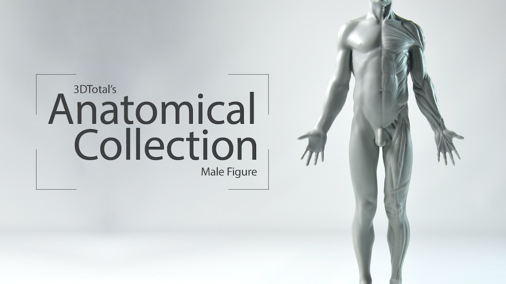 3DTotal's Anatomical Collection: Male figure project video thumbnail