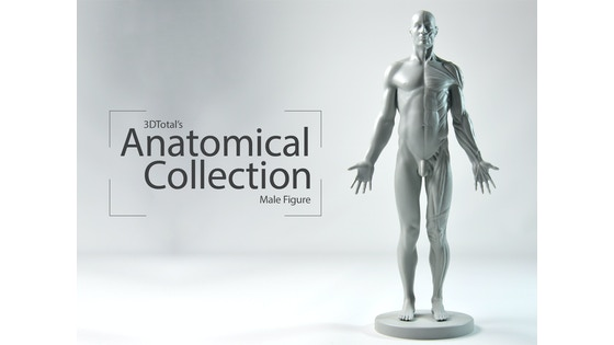 Track 3dtotals Anatomical Collection Male Figures Kickstarter