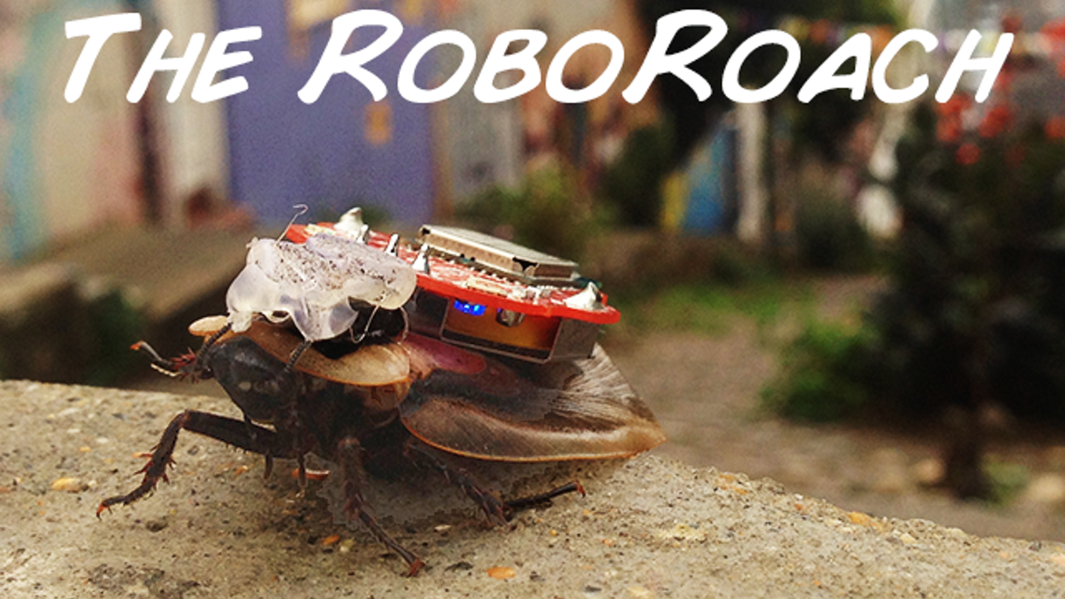 The Roboroach Control A Living Insect From Your Smartphone By