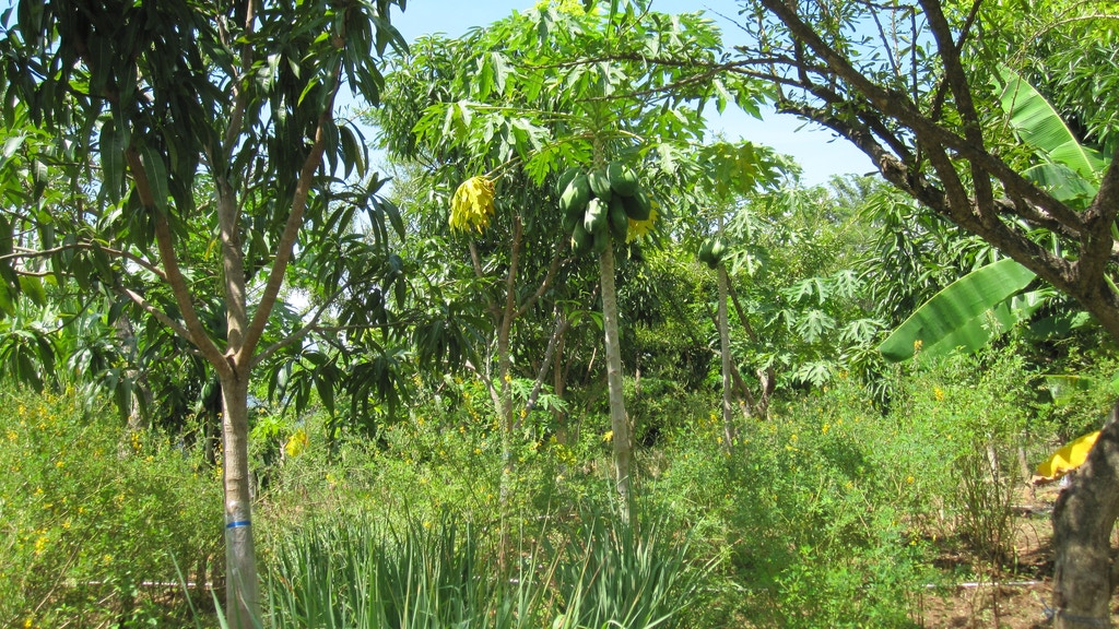 """Writing """"Toolkit for Climate Stabilization with Tree Crops"""" project video thumbnail"""