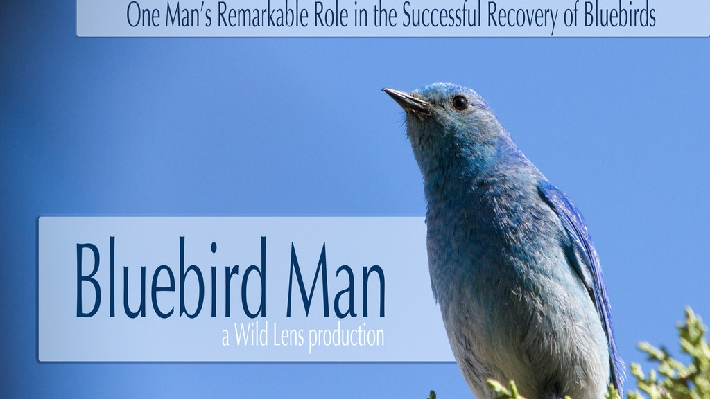 Bluebird Man project video thumbnail