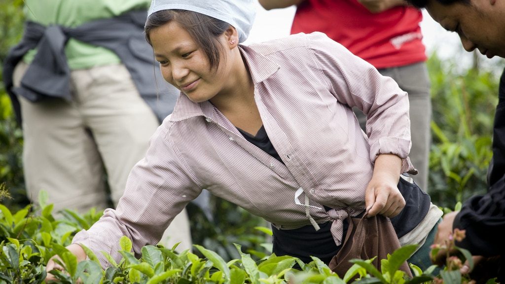 Nepali Tea Traders: Changing the World Through Tea project video thumbnail